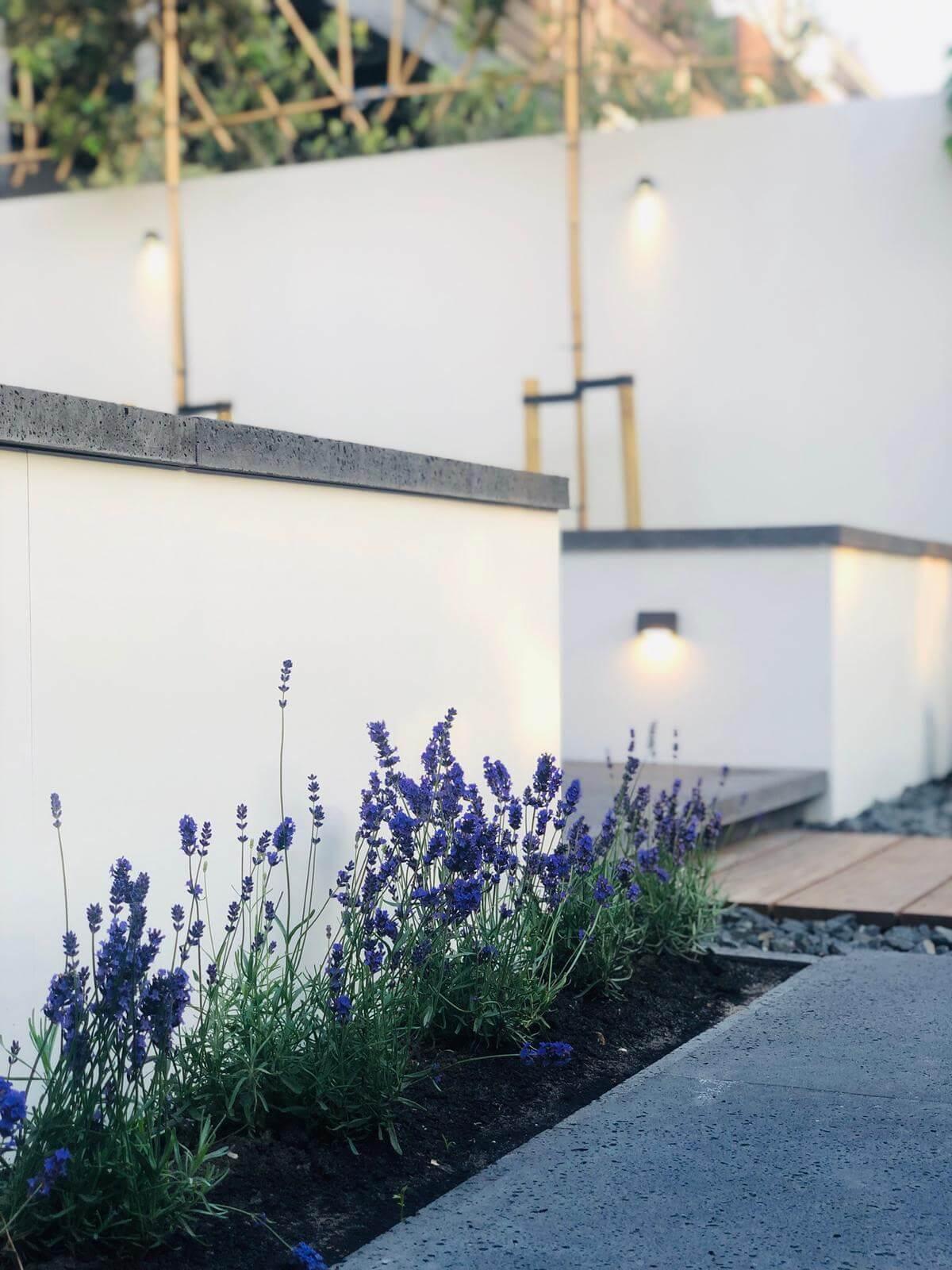 lavendel in tuin beplantingsplan