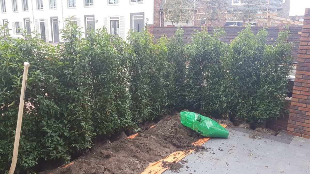 Haag aanleg groene erfafscheiding