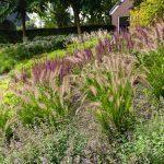 grassentuin tuinaanleg regio Alphen aan de Rijn