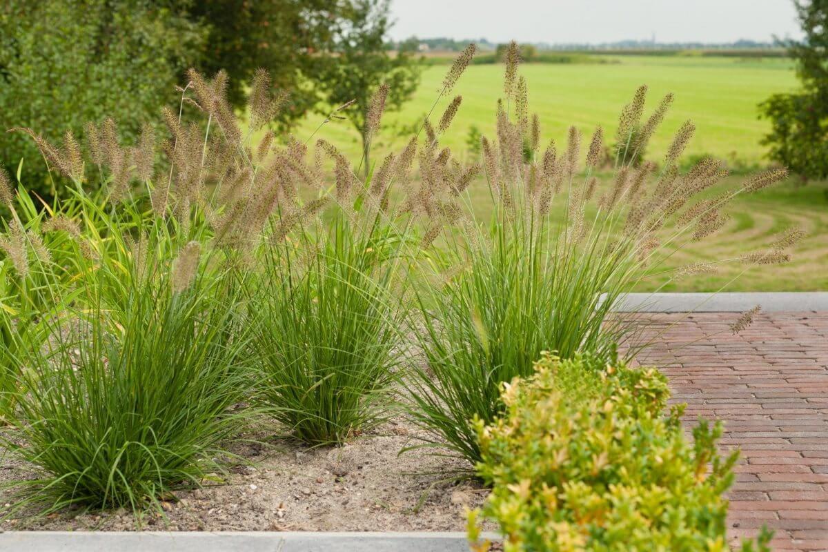 tuinaanleg grassentuin hoveniersbedrijf Alphen a/d Rijn