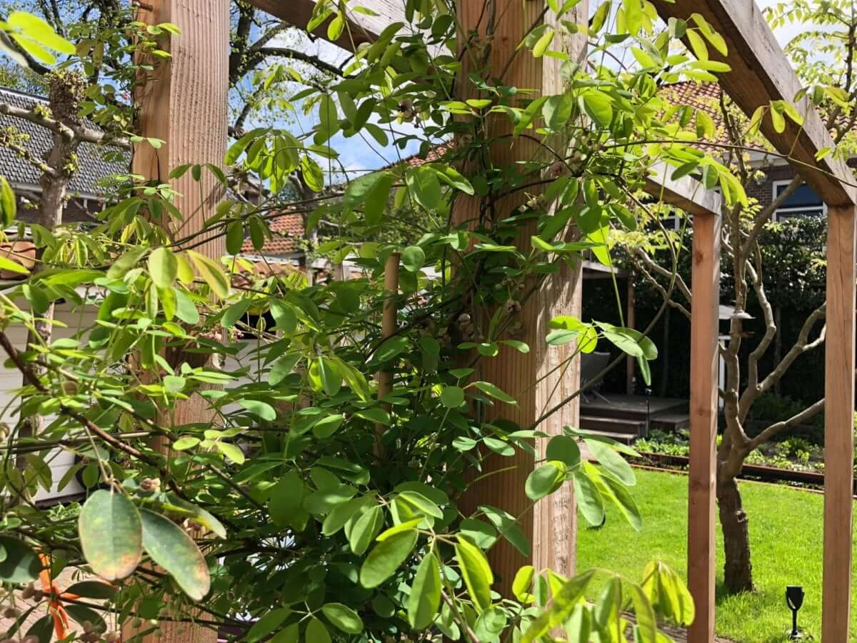 tuin pergola tuinman aanleg