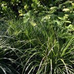 hoveniersbedrijf tuinaanleg regio Badhoevedorp grassen