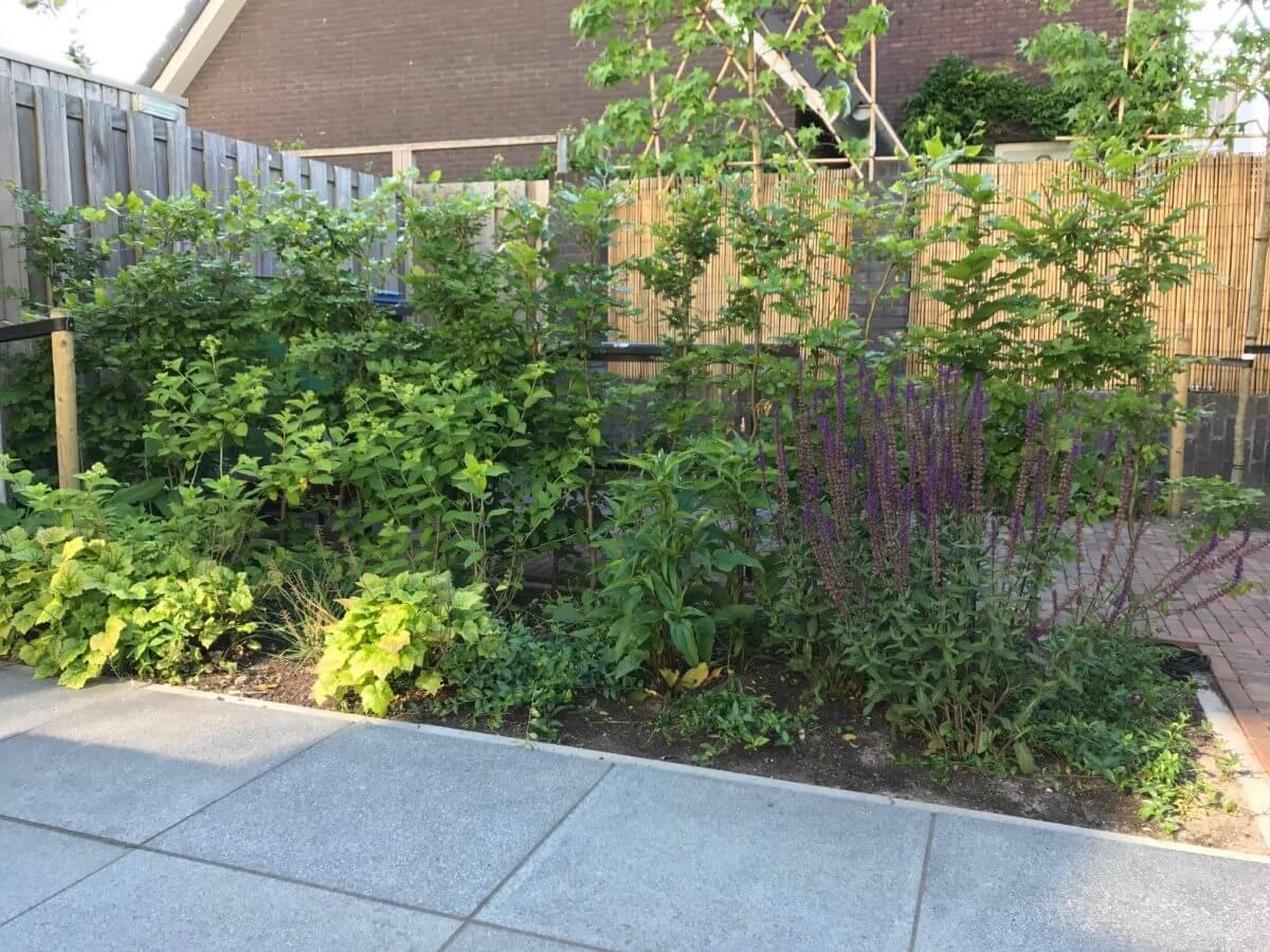 planten tuinman Amstelveen onderhoud
