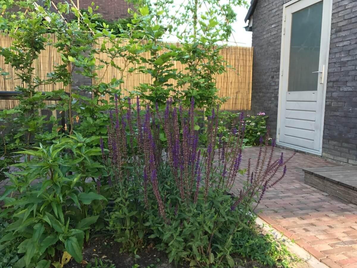 beplanting tuinaanleg hovenier Amstelveen