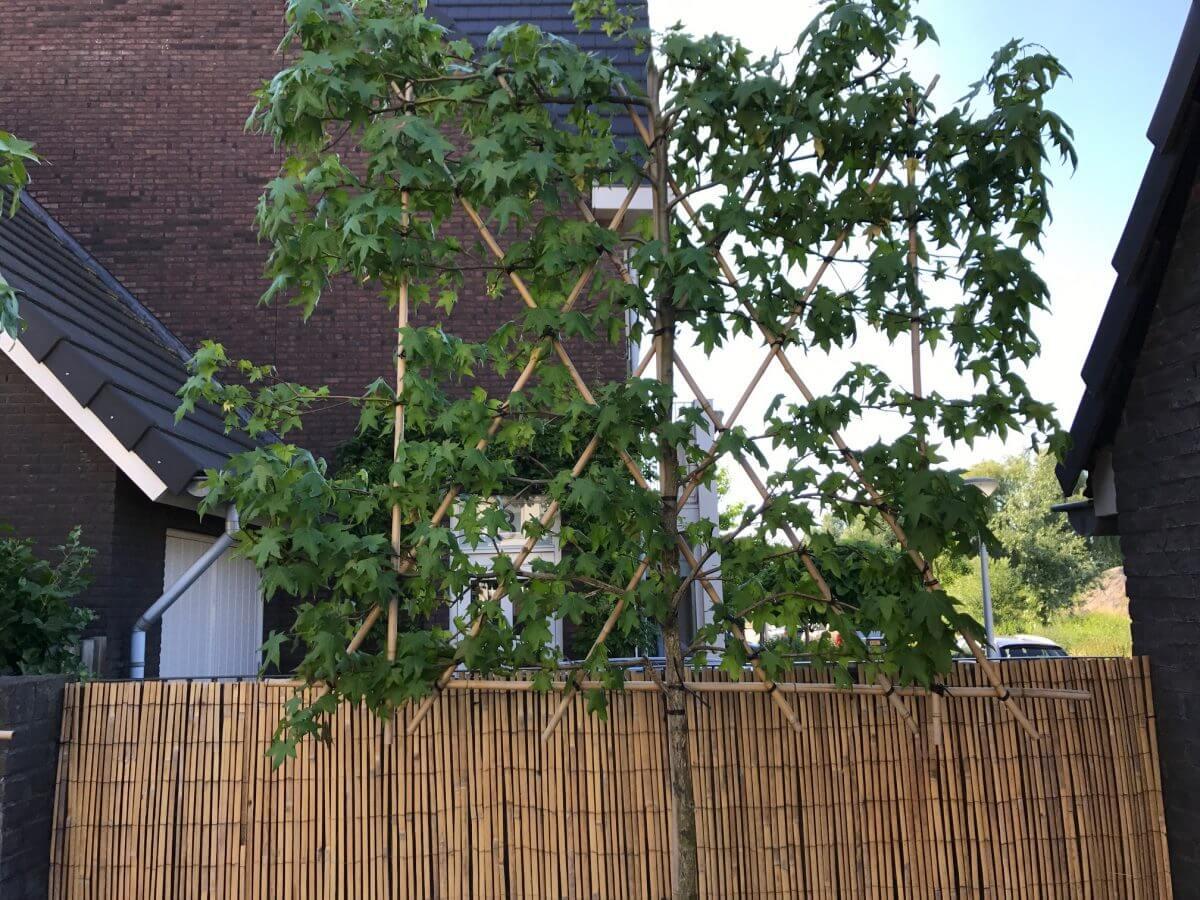 hovenier Amstelveen tuinaanleg beplanting