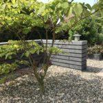 tuinmuur beton tuinman Amstelveen