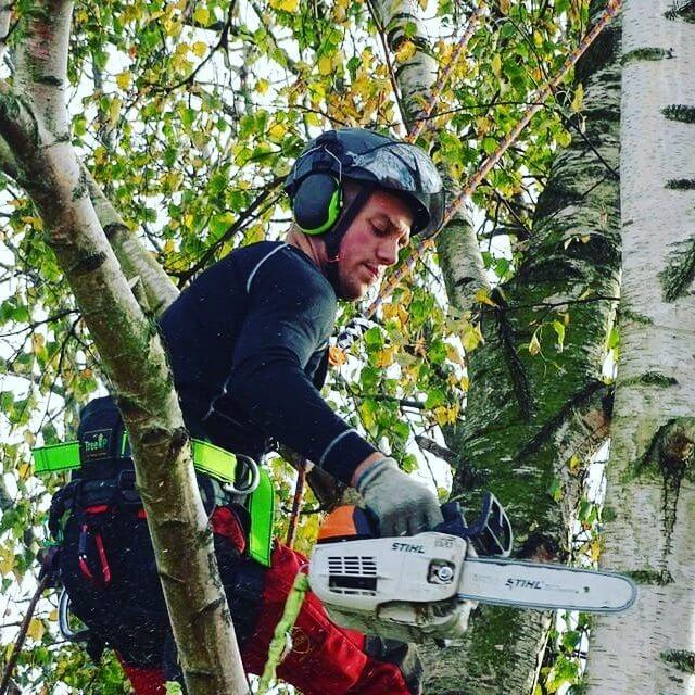 snoeien boom hovenier boomverzorger