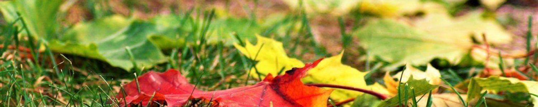 herfstblad_grond