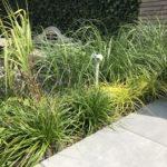 hovenier aanleg tuin grassen