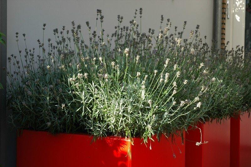Plantenbakken van ADEZZ geplaatst door hovenier Badhoevedorp. Tuinaanleg hovenier in Amsterdam