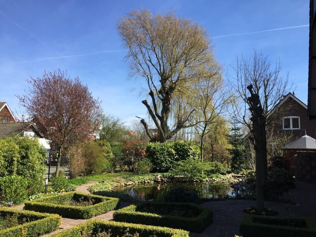 snoeien boom hoveniersbedrijf Amstelveen