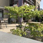 beplanting tuin aanleg hovenier